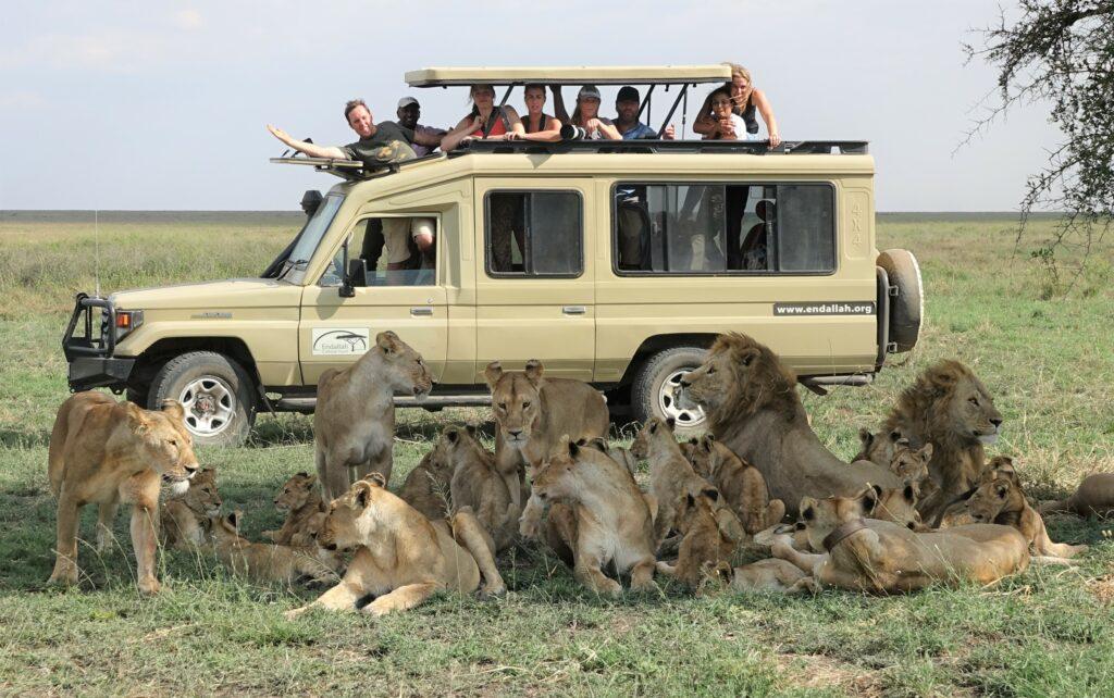 soezende leeuwen bij acaciaboom Tanzania