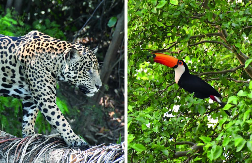 Fauna in Brazilië